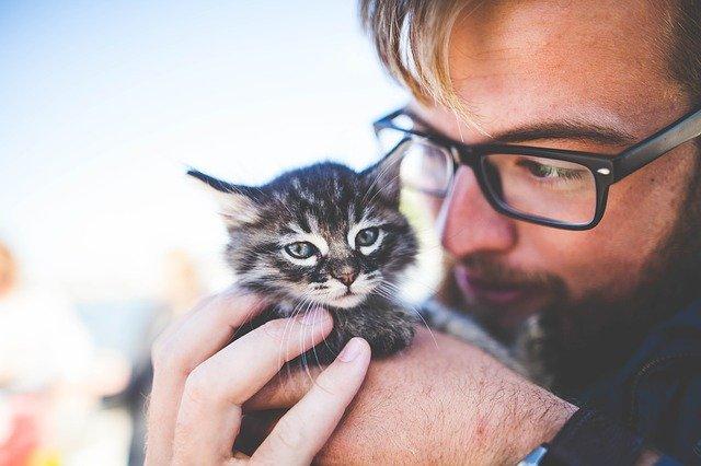 Vzdelávanie a výchova mačky – Gospol 3a02fbea09f